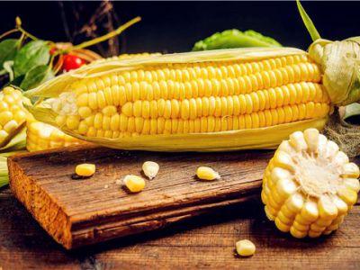 怎样提高玉米的产量?