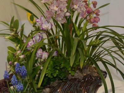 兰花种子的种植方法