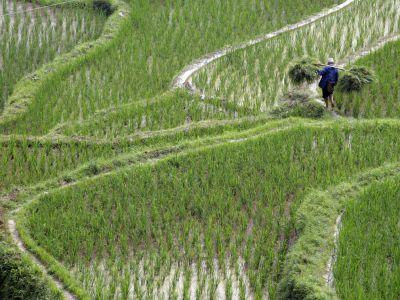 农民使用信息通信技术的因素:巴基斯坦和中国的比较分析