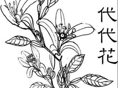 三代同堂代代花,一生相伴守护TA